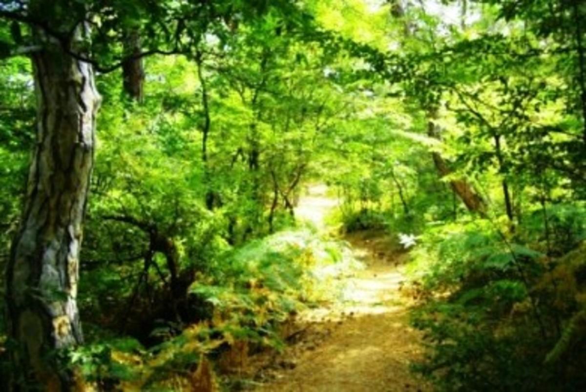 2 εκατομμύρια στρέμματα δασών, έχουν χαθεί στην χώρα μας… | Newsit.gr