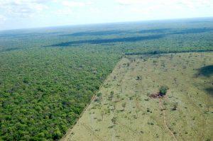 Απογραφή δασών και δασικών εκτάσεων