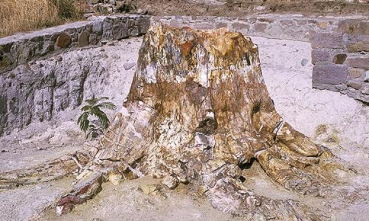 Το Απολιθωμένο Δάσος Λέσβου πάει… Κωνσταντινούπολη | Newsit.gr