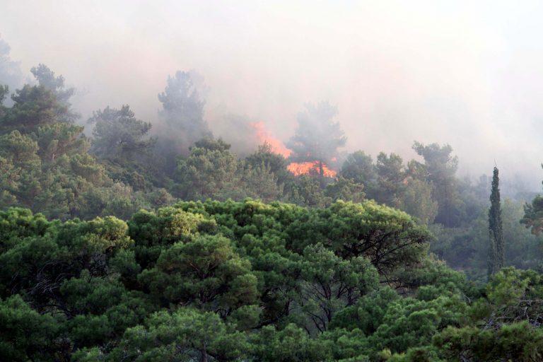 Πυρκαγιά σε δασική περιοχή στην Μυτιλήνη   Newsit.gr