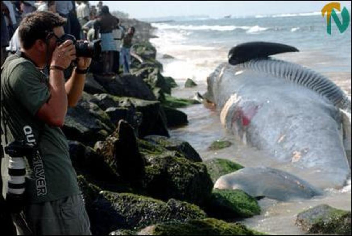 28 φάλαινες νεκρές στη Ν. Ζηλανδία | Newsit.gr