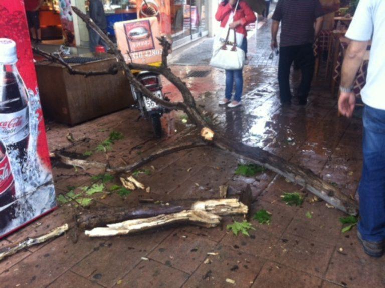 Λαμία: Έπεσε δέντρο πάνω στο κεφάλι της! | Newsit.gr