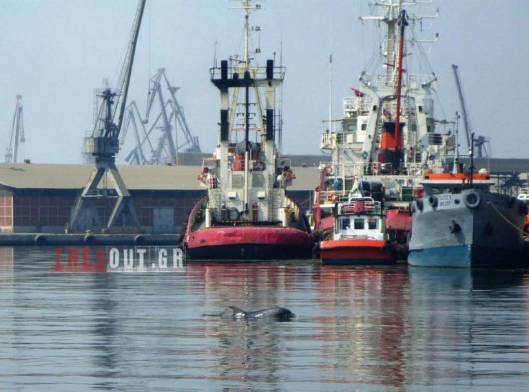 Δελφίνι στο Θερμαϊκό κόλπο | Newsit.gr