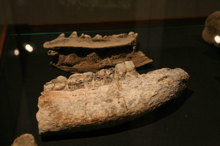 Κρήτη: Βρέθηκε απολιθωμένο κεφάλι 5 εκατομμυρίων ετών   Newsit.gr