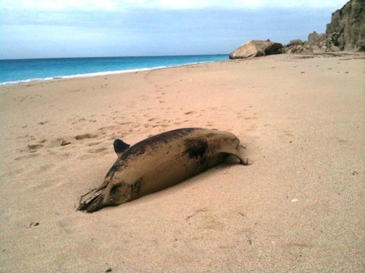 Λευκάδα: Νεκρό δελφίνι εντοπίστηκε στην παραλία Κάθισμα | Newsit.gr