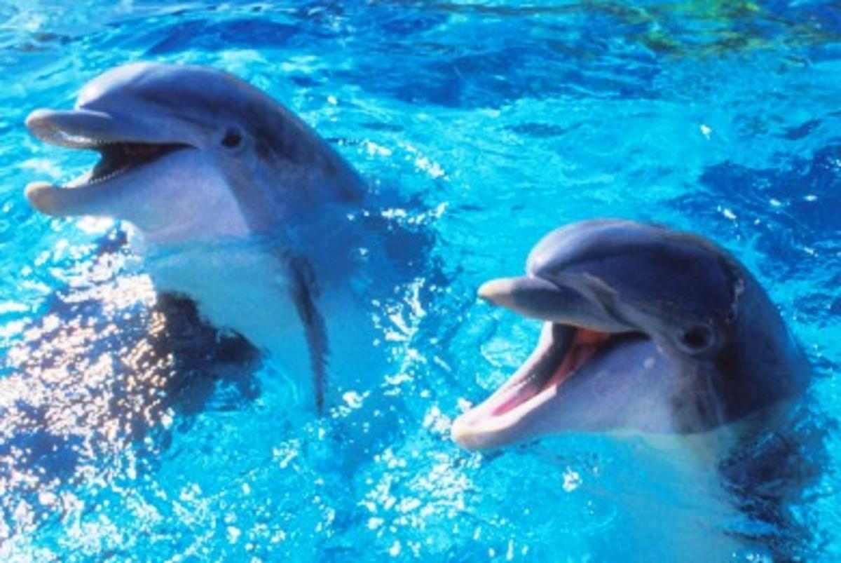 Σάμος: Ακόμα δύο, νεκρά δελφίνια… | Newsit.gr