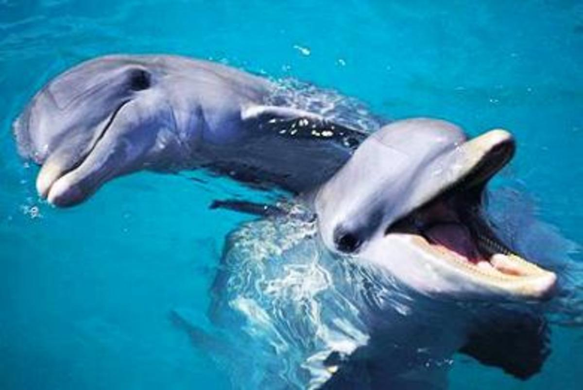 Νεκρά δελφίνια στο Θερμαϊκό… | Newsit.gr