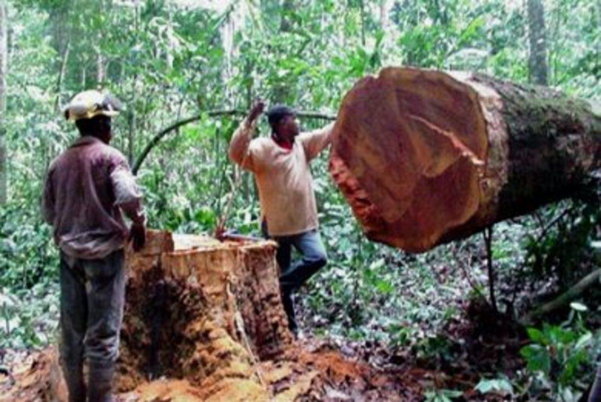 Από λαθροϋλοτόμηση,  το 40% της παγκόσμιας ξυλείας…   Newsit.gr