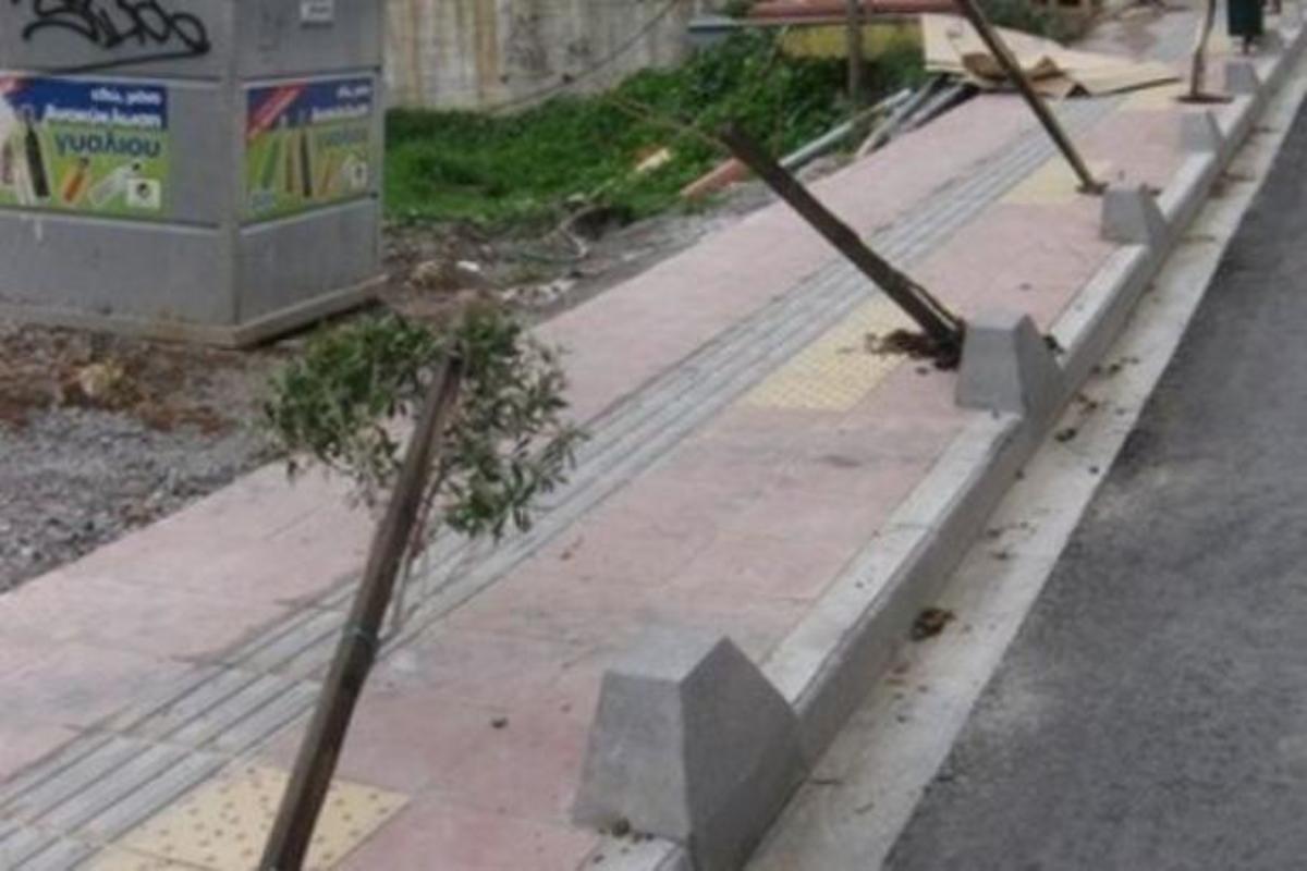 Κρήτη: Ξέσπασαν στα δέντρα του δρόμου! Τα έσπασαν όλα! ΦΩΤΟ | Newsit.gr