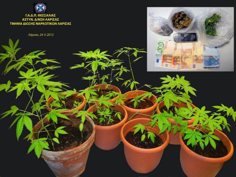 Λάρισα: Τα δεντράκια που καλλιεργούσε στο σπίτι του δεν ήταν αθώα | Newsit.gr
