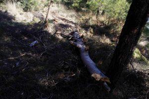 Τρίκαλα: Τον σκότωσε το δέντρο που έκοβε!