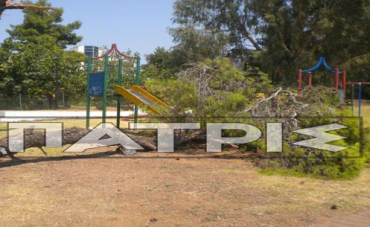 Ηλεία: Δέντρο καταπλάκωσε τσουλίθρα σε παιδική χαρά!   Newsit.gr
