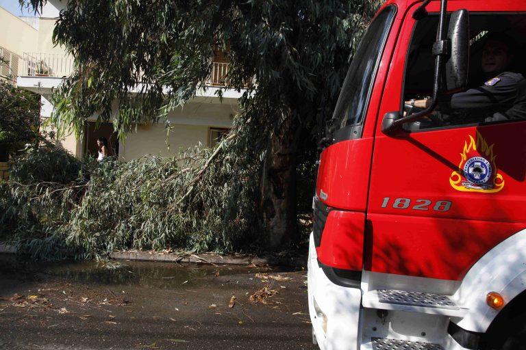 Οι άνεμοι σάρωσαν την Αττική – Δέντρο καταπλάκωσε μία κοπέλα | Newsit.gr