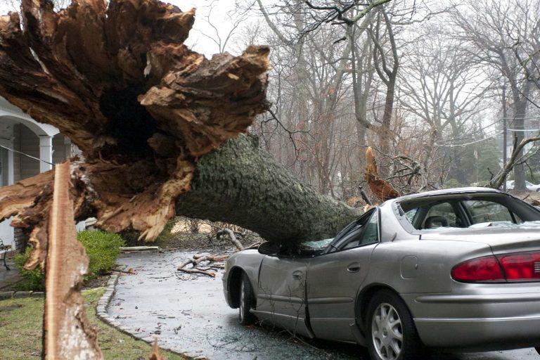 Δέντρο κατέστρεψε… αυτοκίνητο!   Newsit.gr