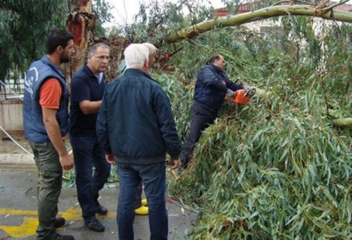 Εύβοια:Έπεσε δέντρο δίπλα από δημοτικό σχολείο – Δείτε φωτογραφίες! | Newsit.gr