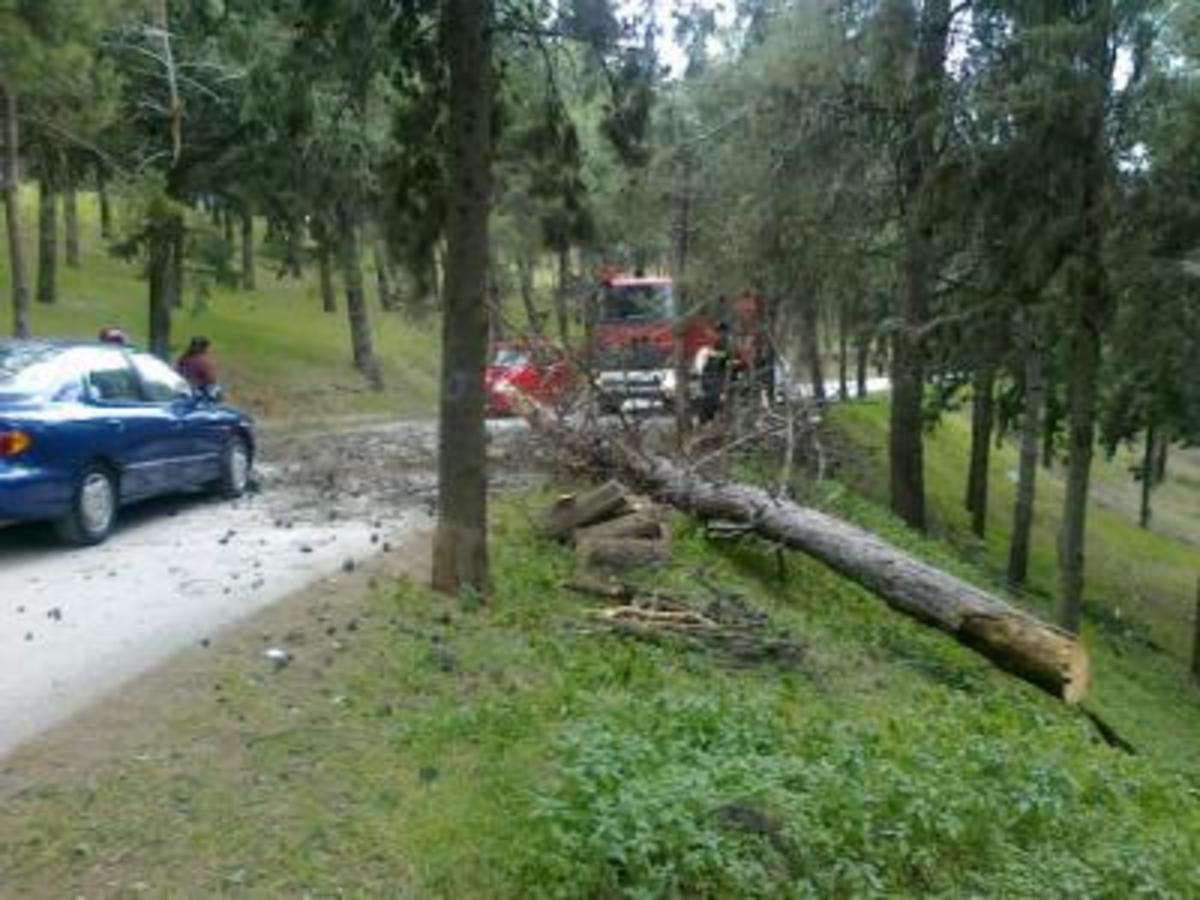 Φθιώτιδα: Έβλεπε το δέντρο να του έρχεται στο κεφάλι! | Newsit.gr