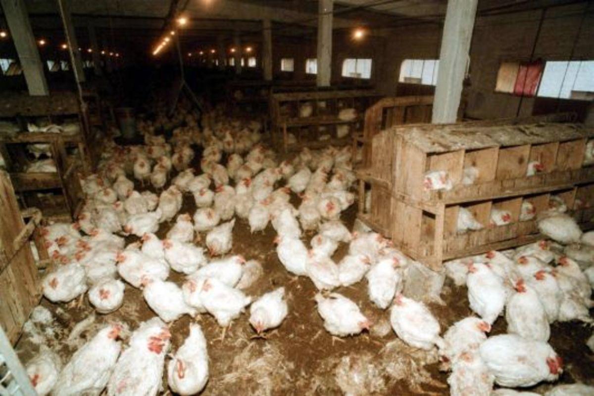 Θεσσαλονίκη: Επείγον έλεγχος για τα μολυσμένα γερμανικά κρέατα | Newsit.gr