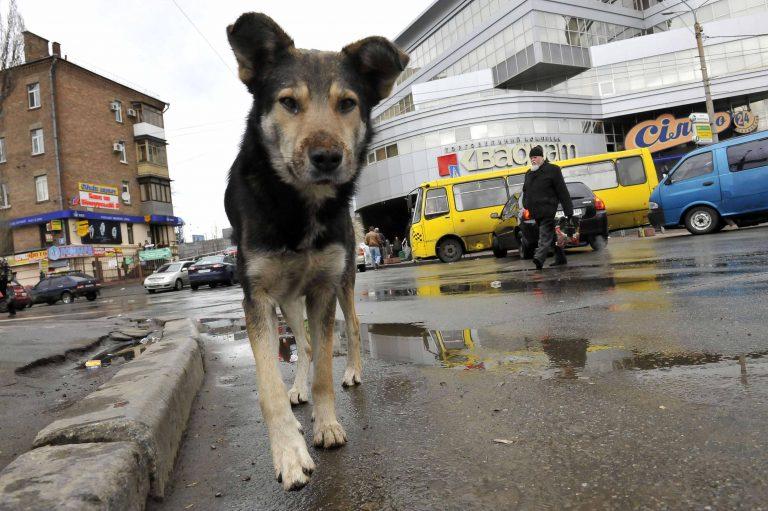 Αδέσποτα σκυλιά επιτέθηκαν και σκότωσαν γνωστό οικονομολόγο στη Σόφια – Ενδεχόμενο μαζικής θανάτωσης | Newsit.gr
