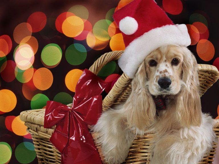 Χριστουγεννιάτικο παζάρι Φιλοζωικού Συλλόγου Φθιώτιδας!   Newsit.gr