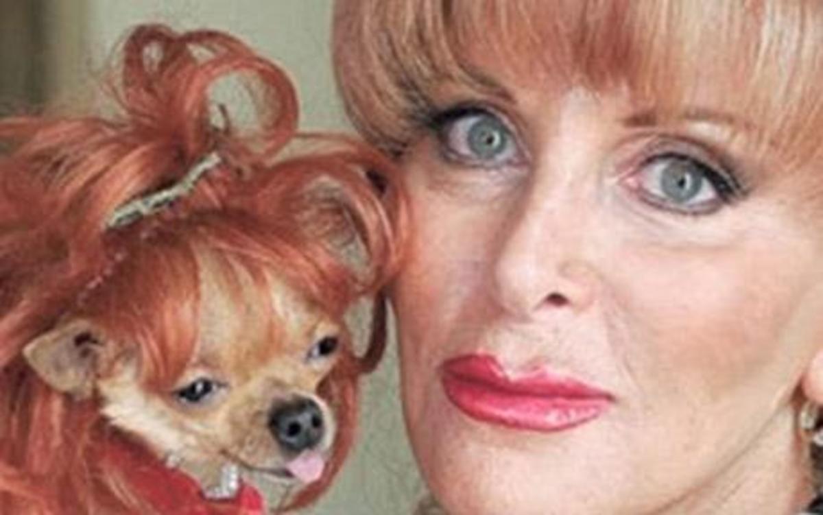 Πάμπλουτη Αμερικανίδα άφησε την περιουσία της σε ένα… τσιουάουα. | Newsit.gr