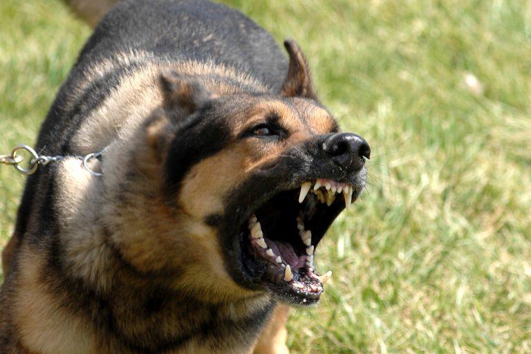 Καταδίκασαν σε θάνατο διά λιθοβολισμού ένα… σκύλο!   Newsit.gr