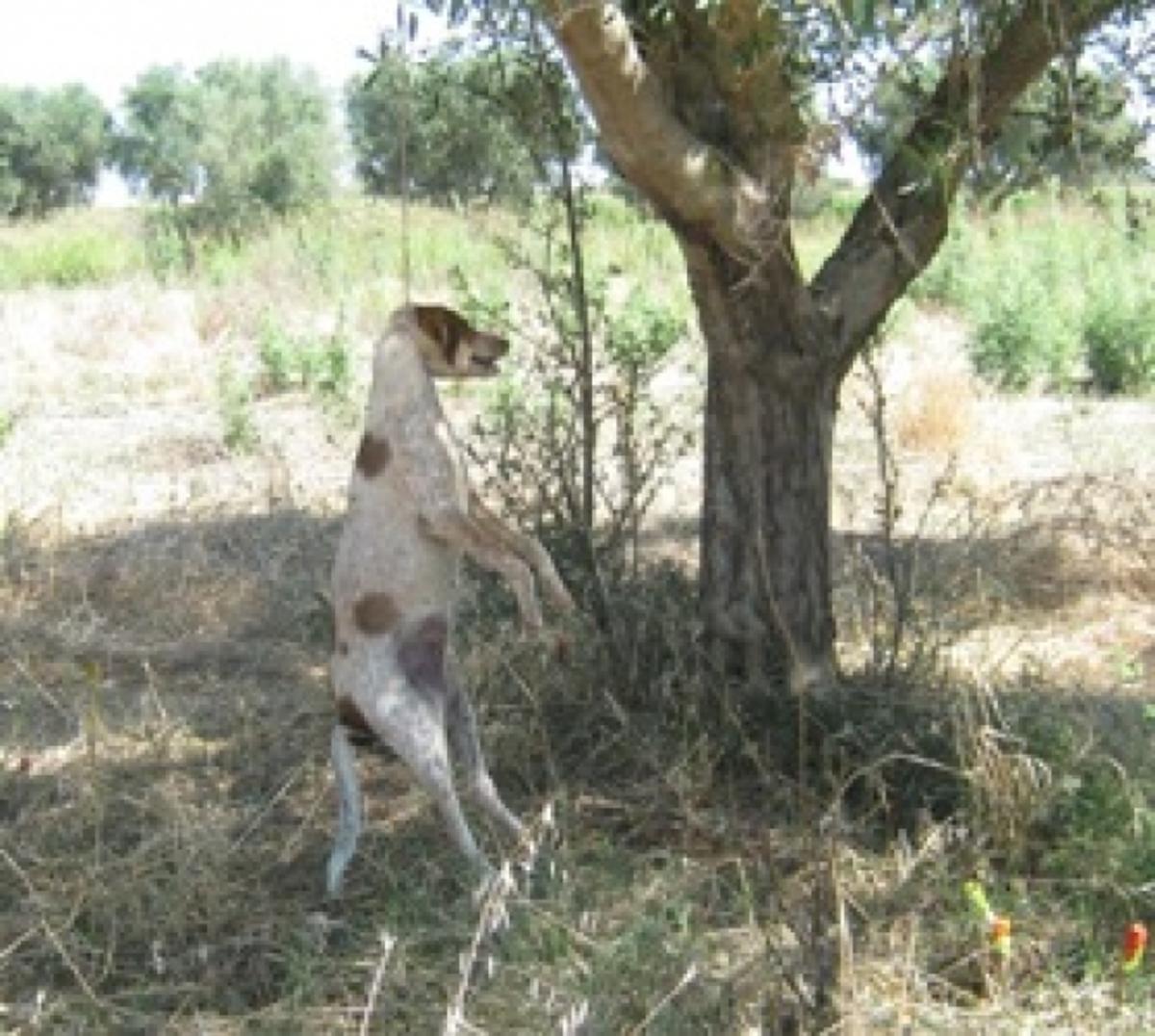 Αμαλιάδα: Κτηνωδία με σκύλο που κρέμασαν σε ελιά! | Newsit.gr