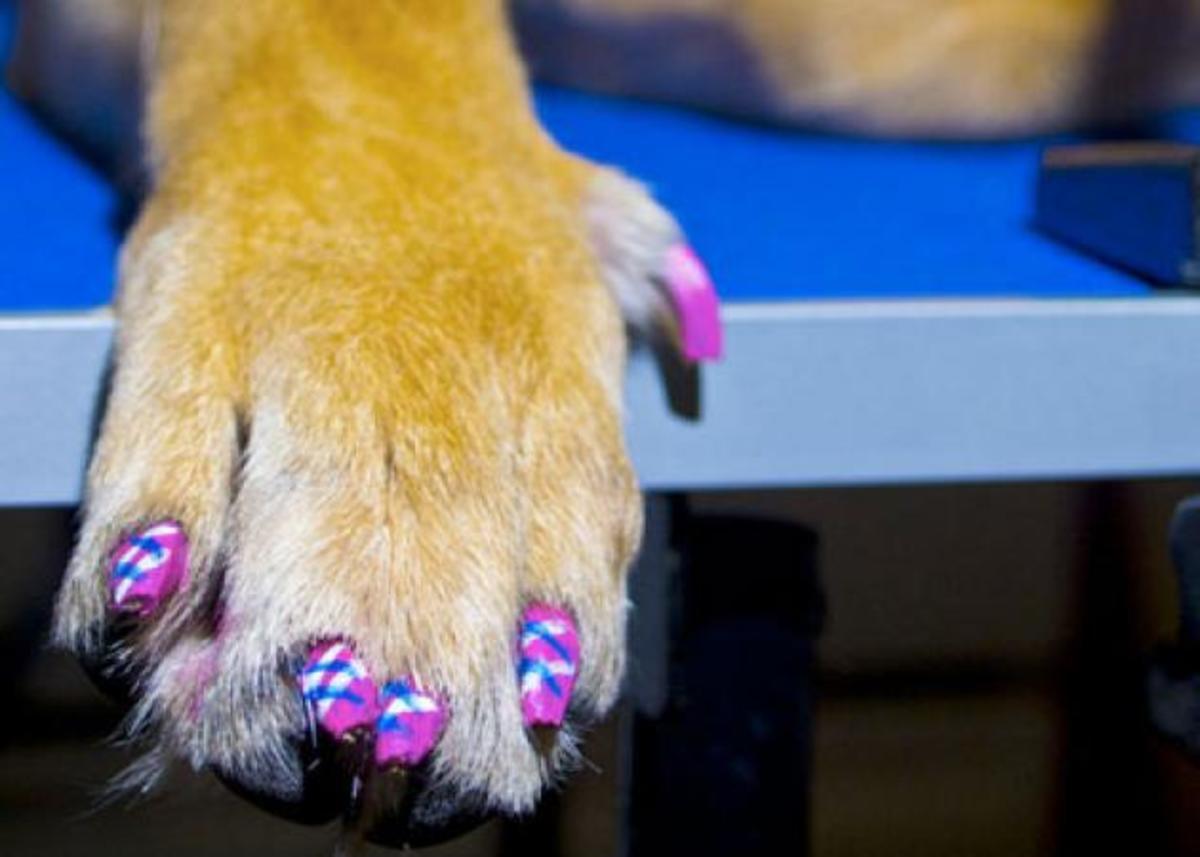 Βερνίκια για σκύλους; Κι όμως, υπάρχουν! | Newsit.gr