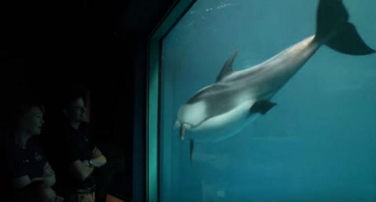 Το δελφίνι κολυμπά κοντά στο τζάμι – Λίγο μετά συνέβη ένα θαύμα! (ΒΙΝΤΕΟ)