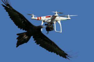 Αυτές είναι οι πιο απίστευτες επιθέσεις ζώων σε drones [vids]