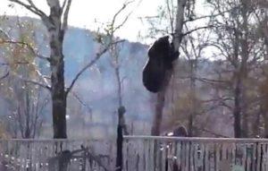Καστοριά: Ξύπνησε και τράβηξε τη φωτογραφία του μήνα – Αρκούδα μέσα στην αυλή του [pic]