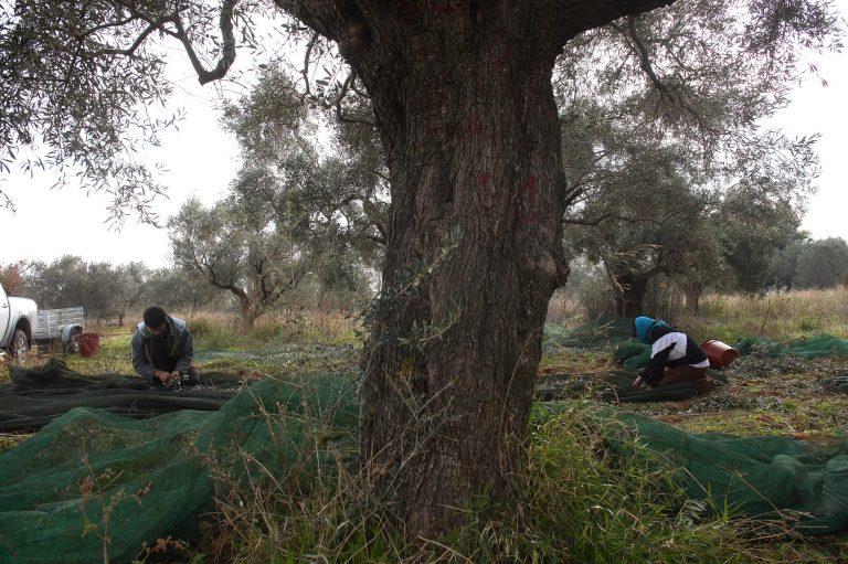 Αγρίνιο: Βρέθηκε κρεμασμένος σε ελιά κοντά στο νεκροταφείο | Newsit.gr