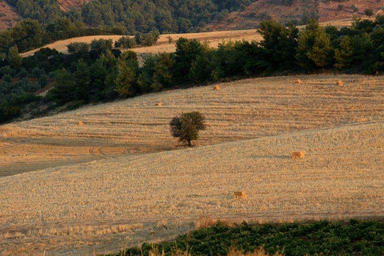 Όποιος πληρώνει… παίρνει – Ρύθμιση του Υπ. Οικονομικών για τις καταπατημένες εκτάσεις του Δημοσίου | Newsit.gr