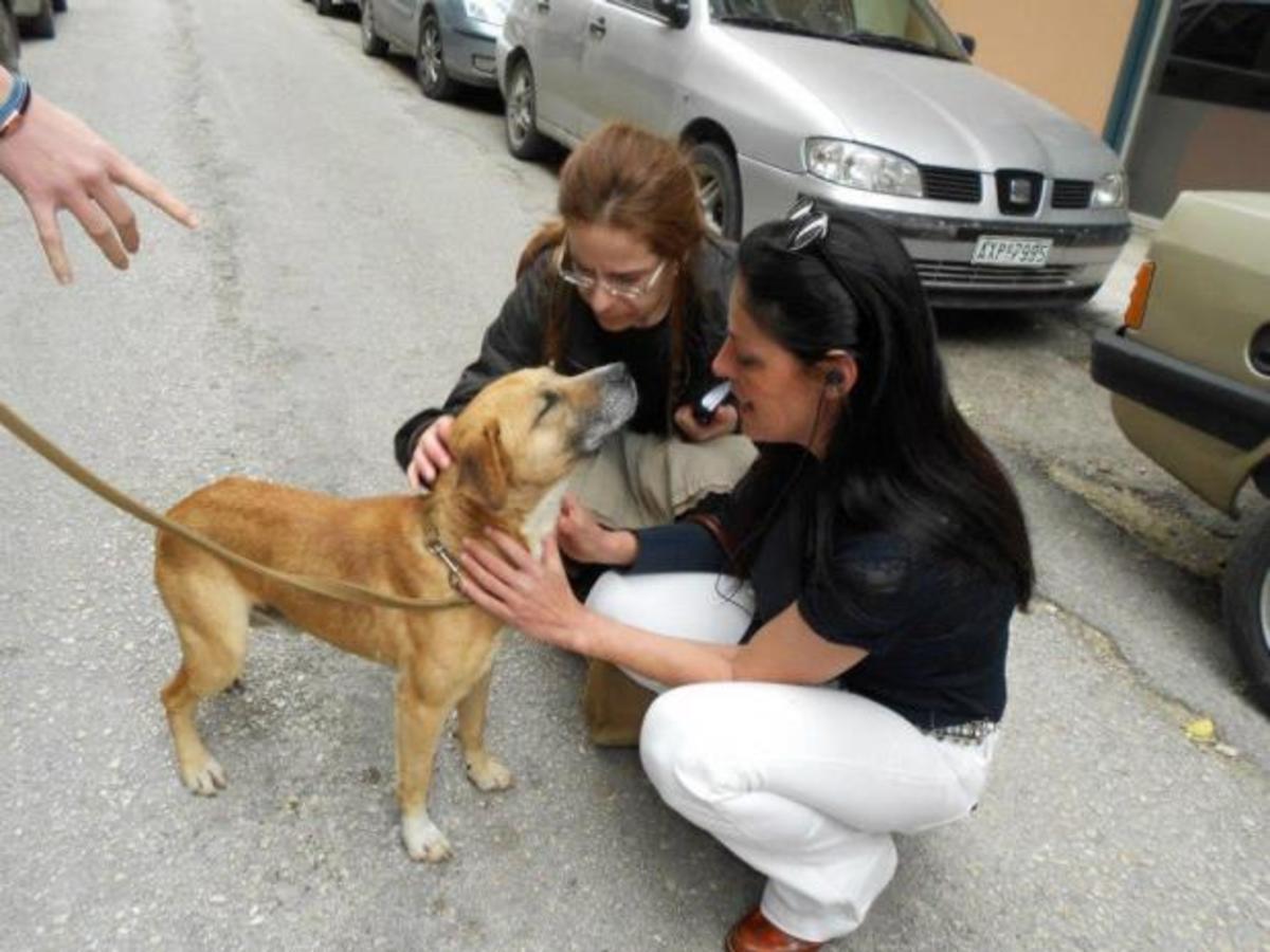 Πάτρα: Αυτός είναι ο σκύλος που κακοποιήθηκε από το αφεντικό του – Φωτό! | Newsit.gr