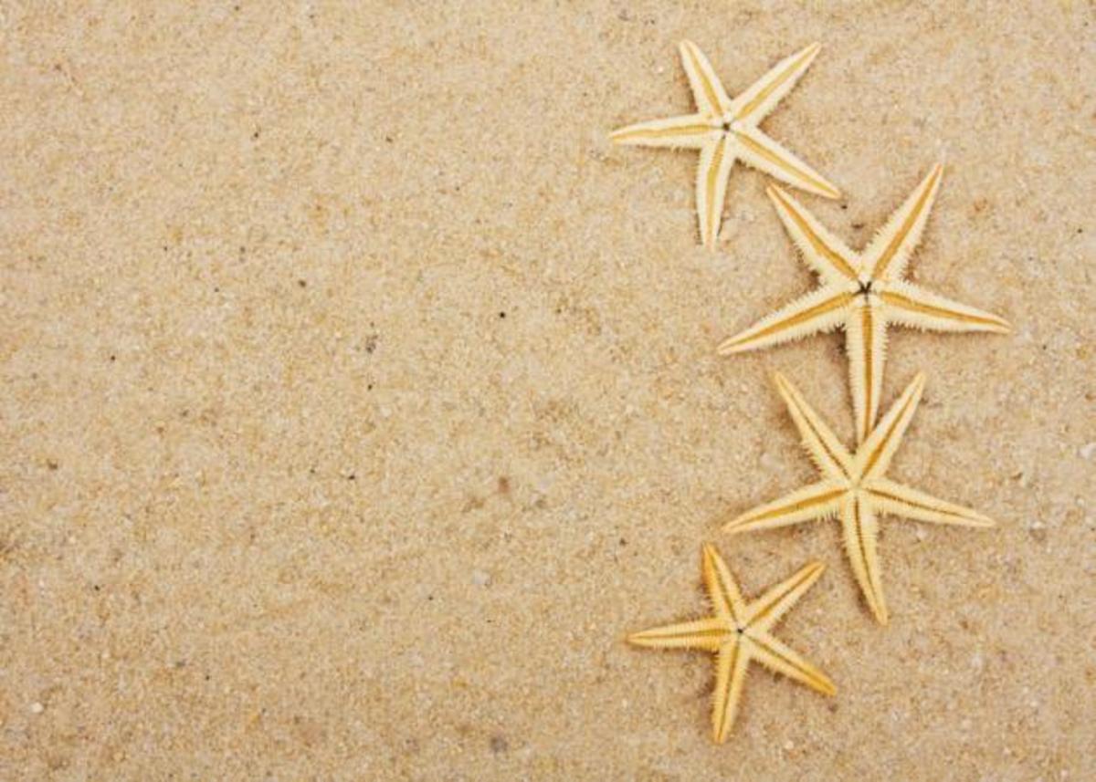 ΖΩΔΙΑ: Εβδομαδιαίες προβλέψεις από 18 μέχρι 24 Ιουνίου. Τι λένε τα άστρα; | Newsit.gr