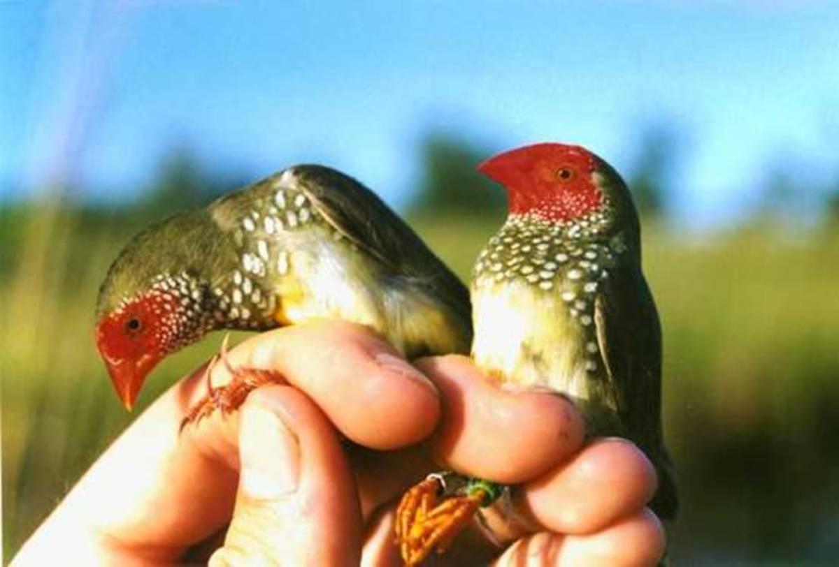 Εξωτικά πουλιά από την Ταϊβάν »πέταξαν» έως την Έδεσσα | Newsit.gr