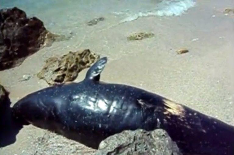 Νεκρή φάλαινα στη Λευκάδα – Δείτε βίντεο | Newsit.gr