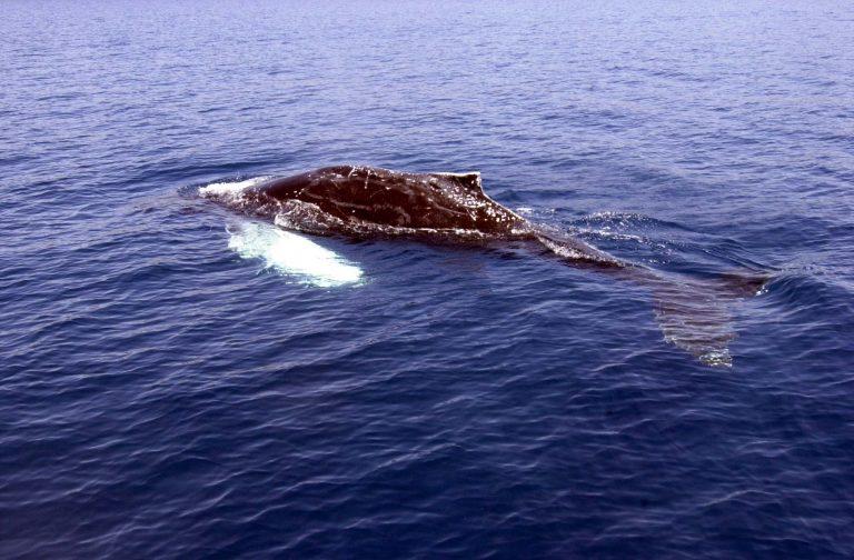 Ρόδος: Βρεθηκε νεκρή φάλαινα | Newsit.gr