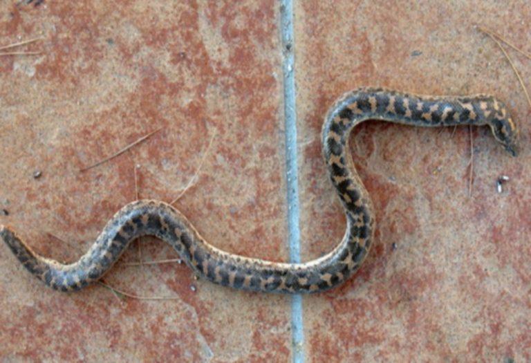 Τους έζωσαν τα φίδια στη Λαμία! | Newsit.gr