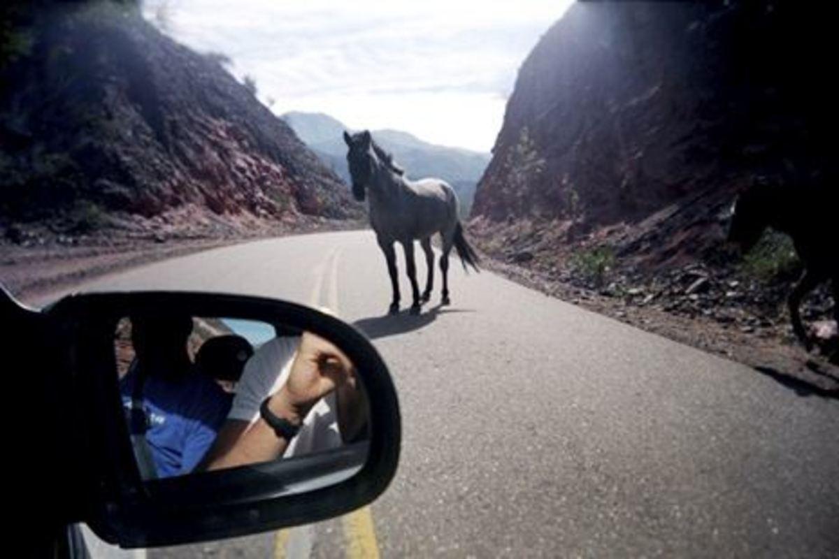 Χανιά: Αφηνιασμένο άλογο στην εθνική οδό-Σκοτώθηκε σε σύγκρουση με αυτοκίνητο! | Newsit.gr