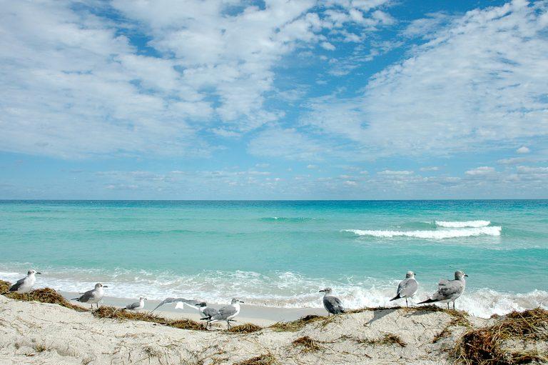 Φλόριντα: Ξεβράστηκαν στην ακτή μπάλες πίσσας…. | Newsit.gr