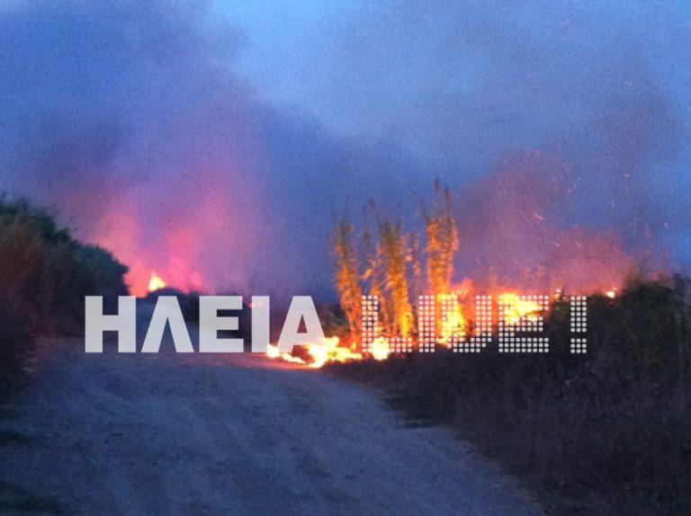 Ηλεία: Στις φλόγες ο Αλφειός – Τουλάχιστον τρία μέτωπα δίπλα στις όχθες | Newsit.gr