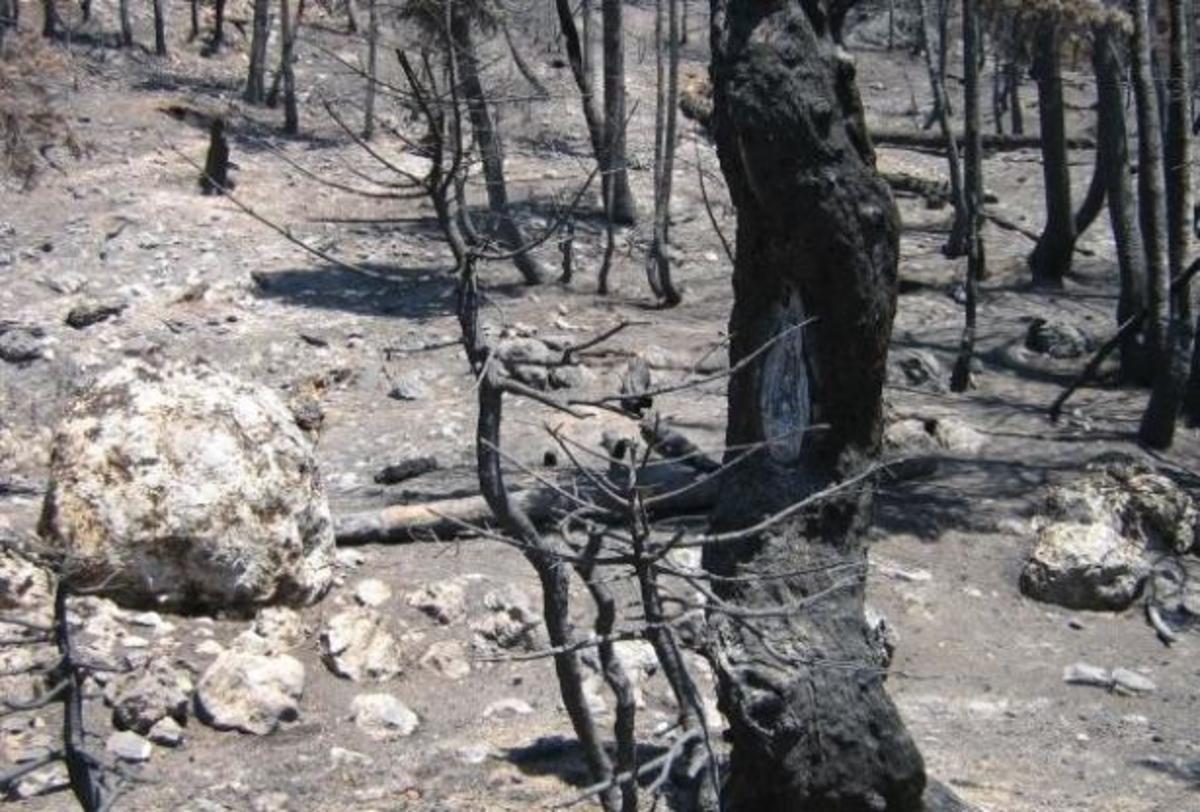 Χανιά: Από αμέλεια η μεγάλη φωτιά στα Σεσκλά | Newsit.gr