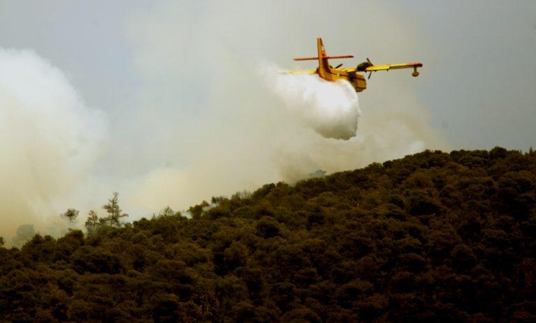Υπό έλεγχο η πυρκαγιά στη Βοιωτία | Newsit.gr