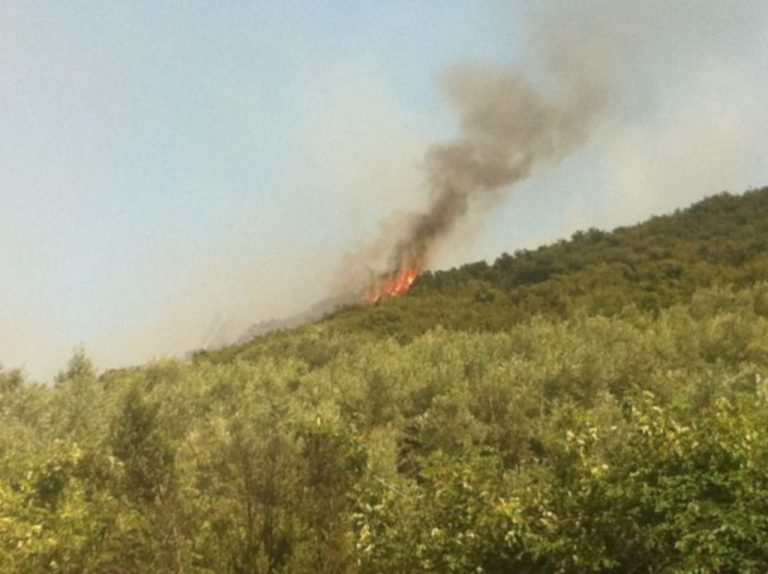 Φθιώτιδα: Τρεις πυρκαγίες μέσα στην ίδια ώρα   Newsit.gr