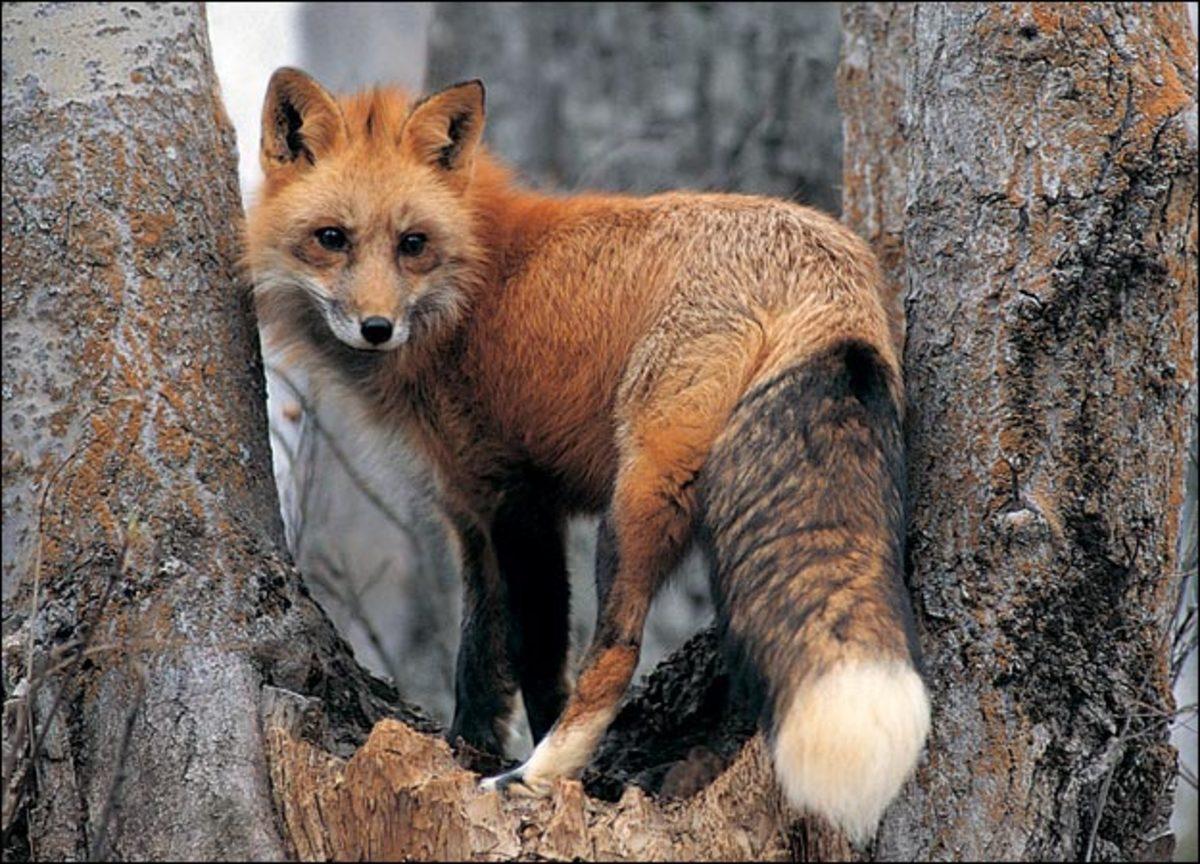 Απελευθερώθηκαν άγρια ζώα και πτηνά… | Newsit.gr