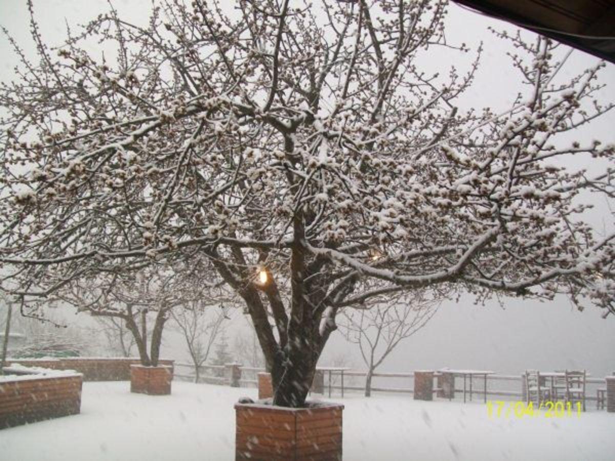 Φθιώτιδα: Στα λευκά πολλά χωριά στα δυτικά του νομού! | Newsit.gr