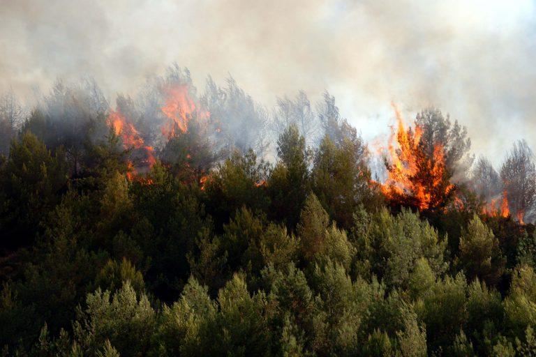 Υπό έλεγχο οι φωτιές σε Άρτα και Γιάννενα | Newsit.gr