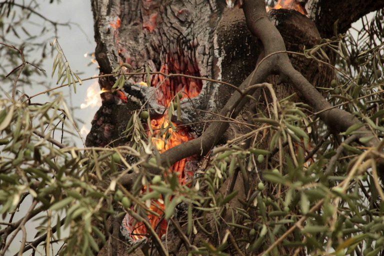 Που υπάρχει σήμερα κίνδυνος πυρκαγιάς   Newsit.gr