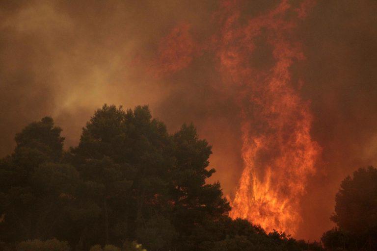 Απαγορεύεται η… κυκλοφορία στα δάση μετά τη δύση του ηλίου! | Newsit.gr