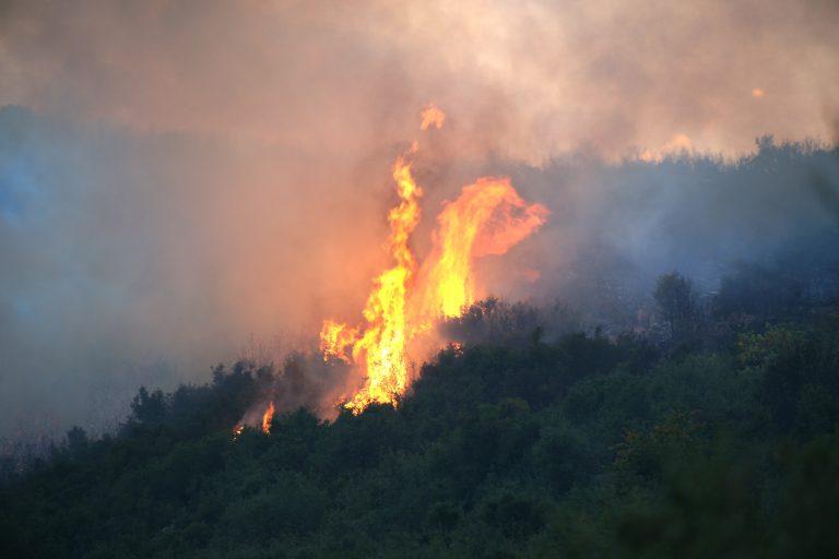 Υπό έλεγχο οι φωτιές σε Μυτιλήνη και Ηλεία | Newsit.gr